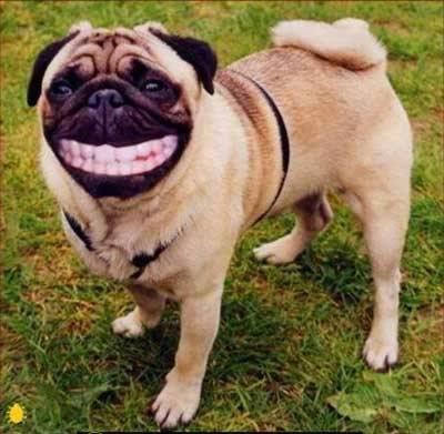 Картинки по запросу Смеющаяся собака