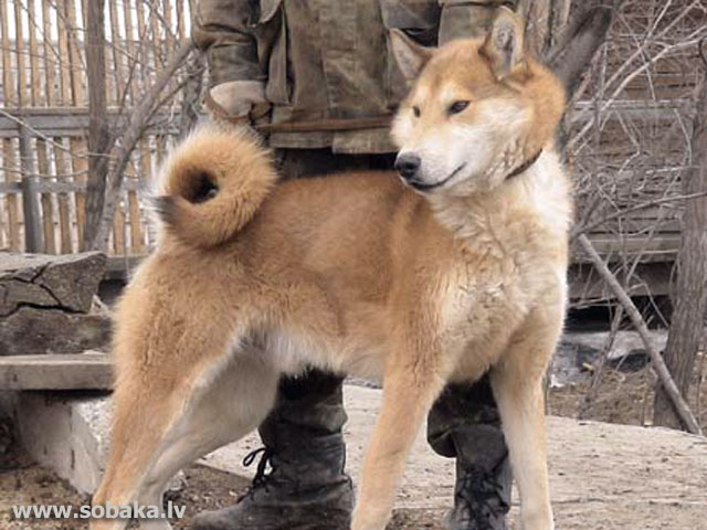 нежные фото собак.