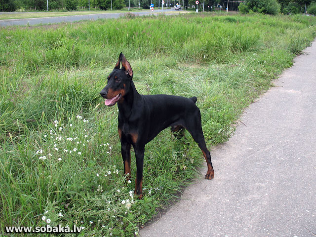 SOBAKA.LV | Все обновления с фото собак | 31.07.2007 г.: http://sobaka.lv/updates/070731