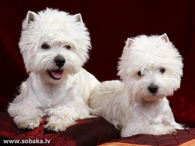 Груминг собак саратов