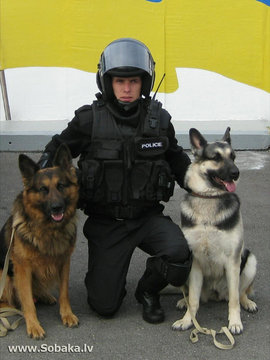 крепежа какие собаки служат в полиции Дата размещения: