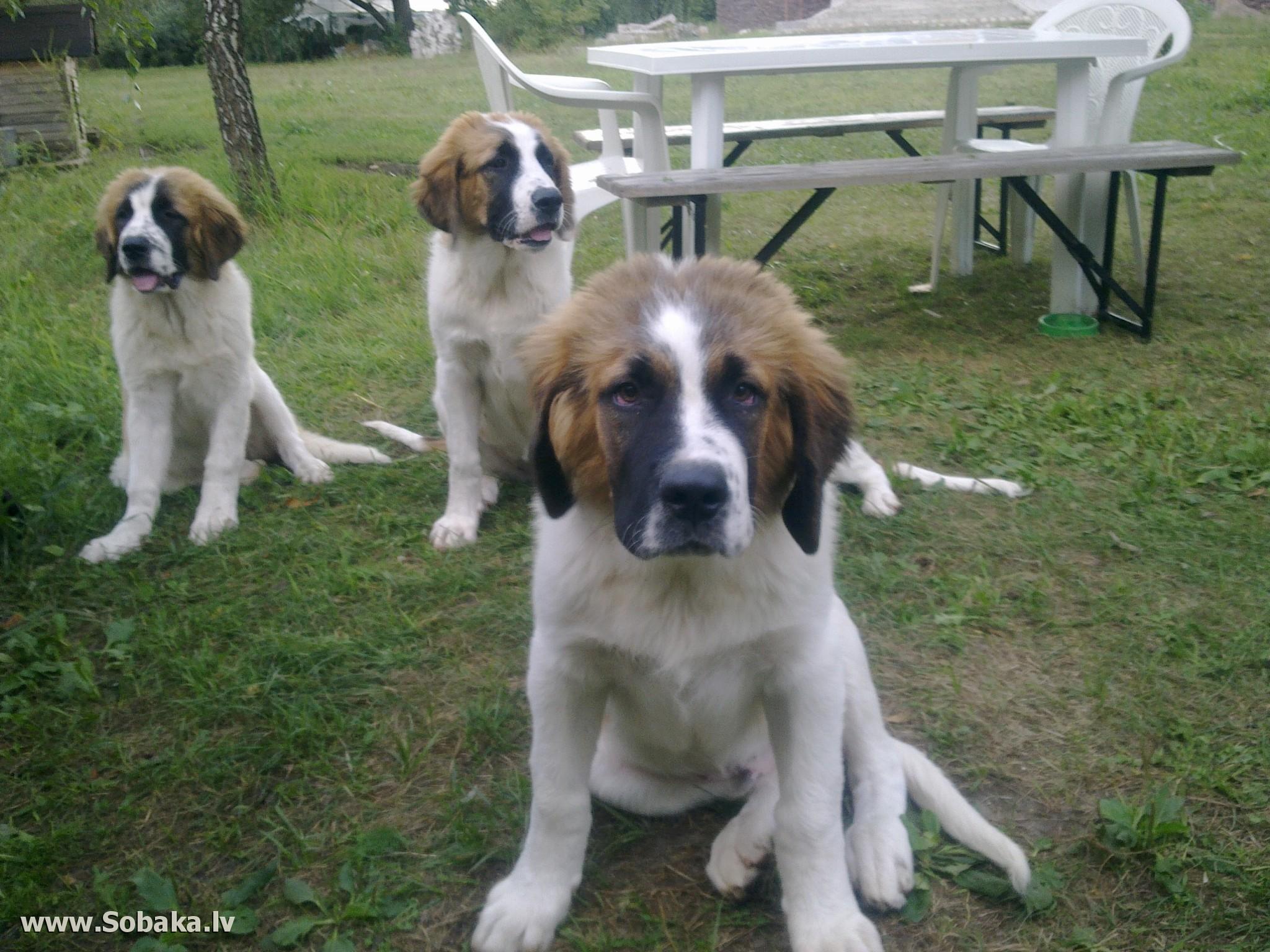 В В Гриценко Перевоспитание собак  Ко Мне