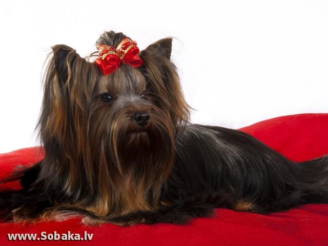 фото ерик собака