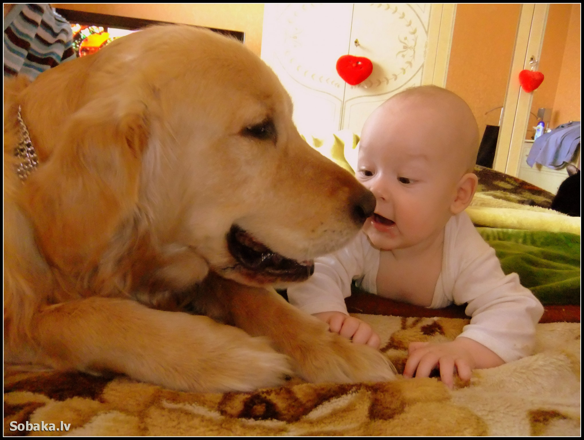 Фото ребёнок с лабрадором