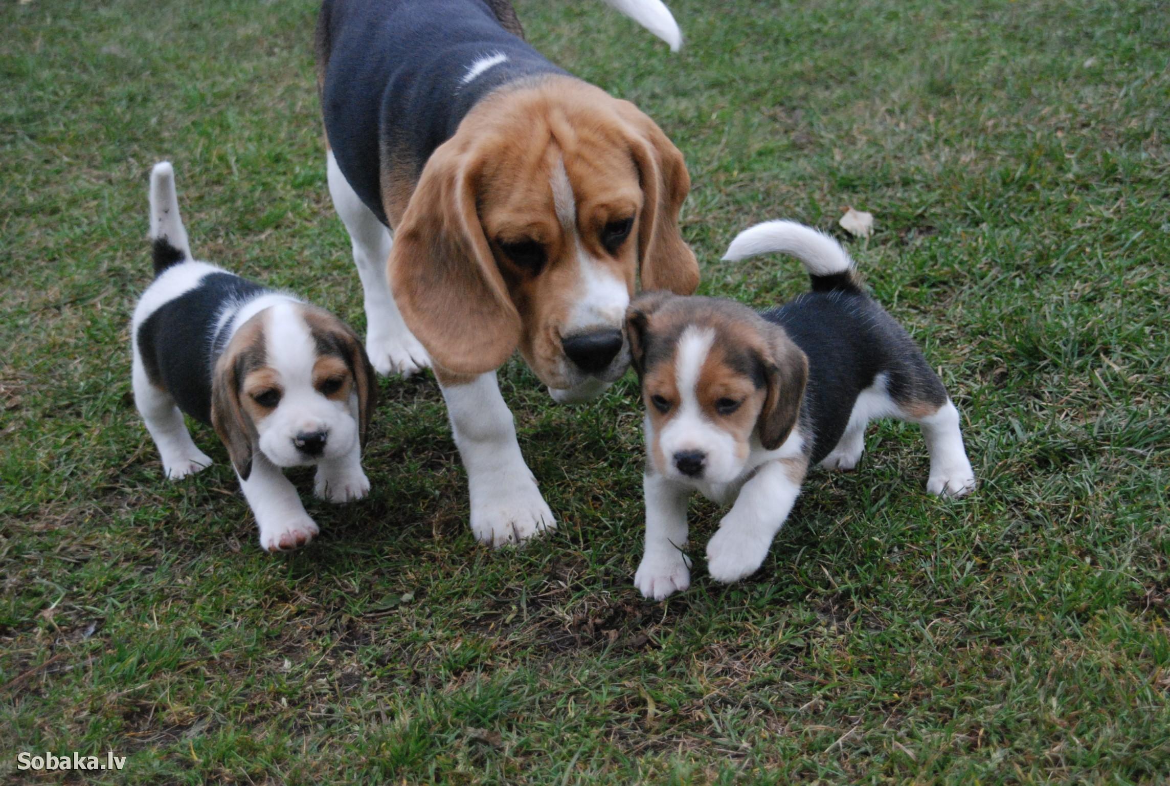 породы собак описание фото названия