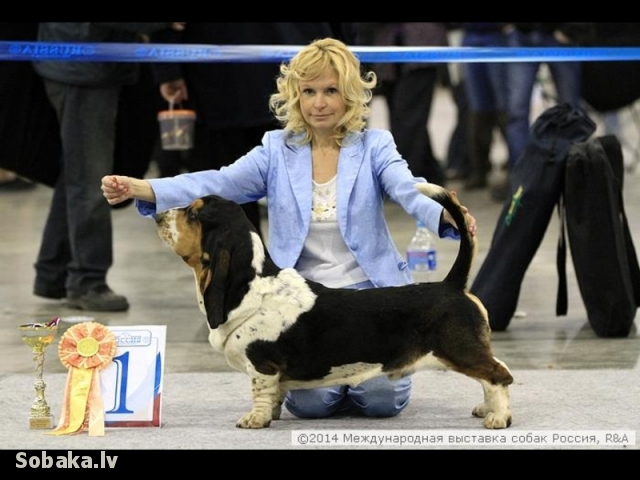 Rossiya-2, Best Junior, handler - Elena Kurbanova. 