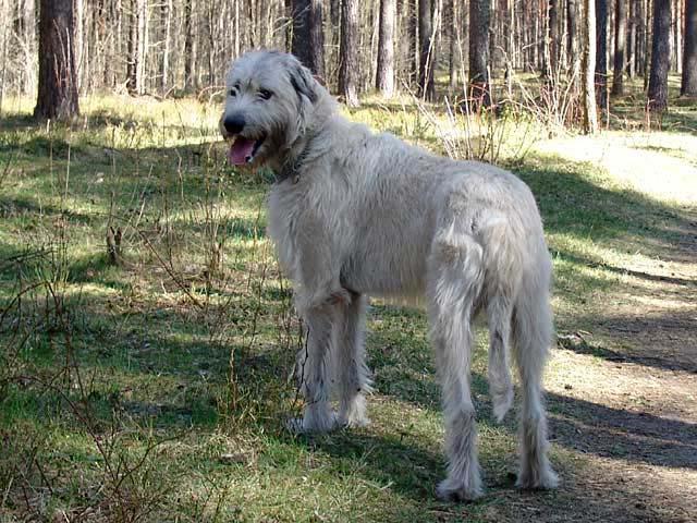 Стрижка собаки своими руками