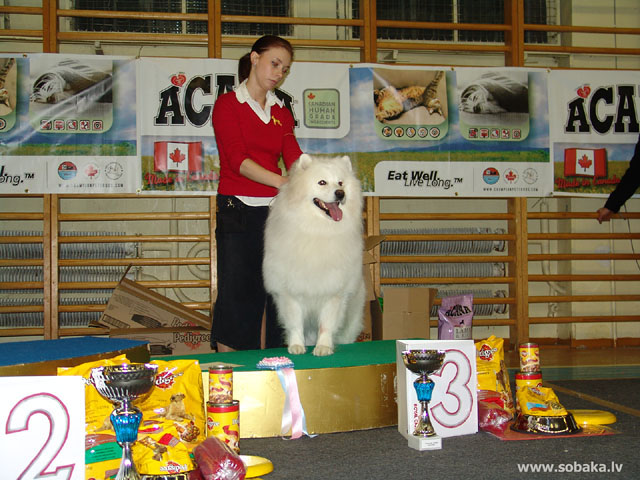 Самоедская собака samoyed iii место в