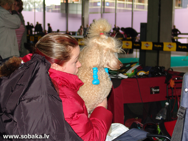 Пудель 