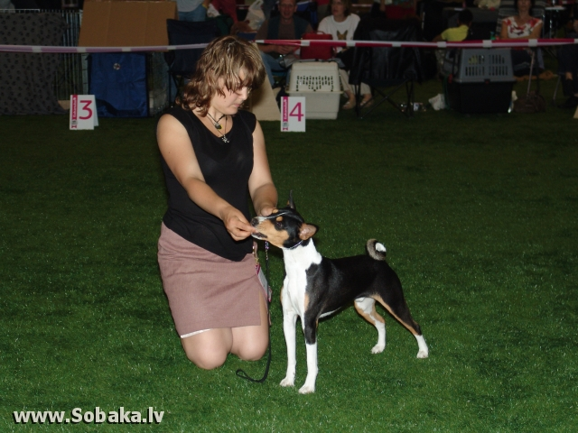 Басенджи 