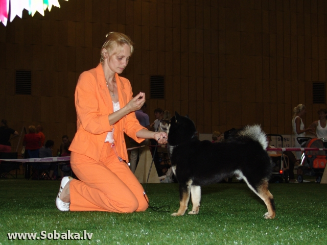 Шиба-ину 