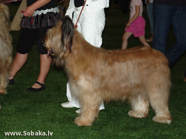 Бриар 
