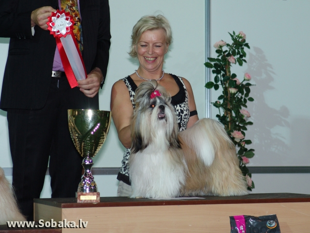 Ши-тцу 