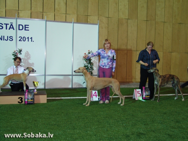 Грейхаунд 