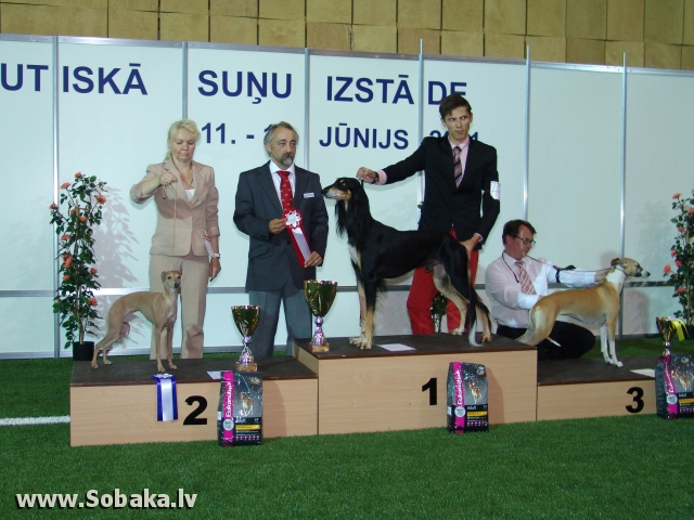 Салюки 