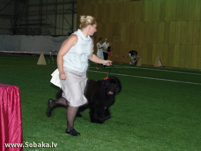 Ньюфаундленд 